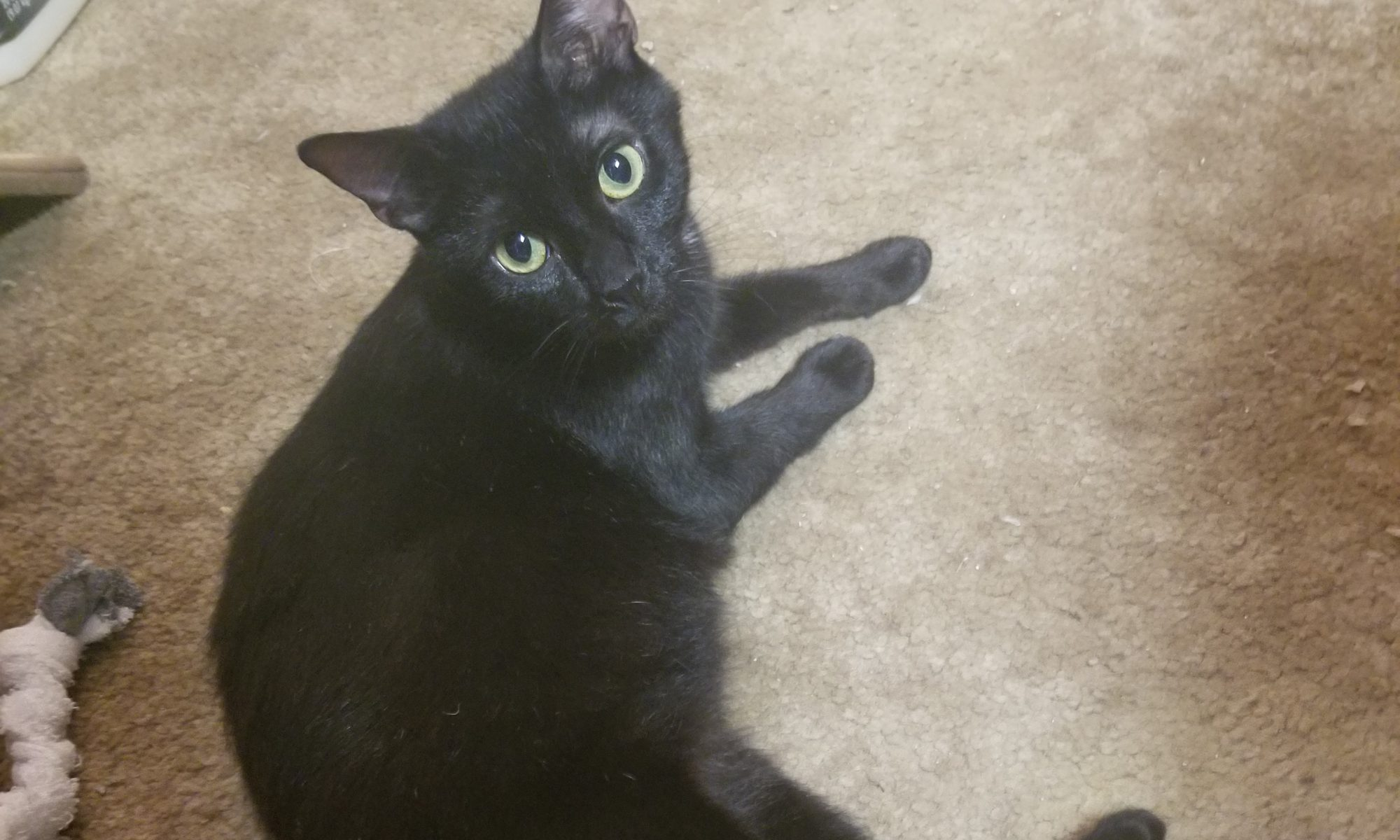 paws fur life In ohio